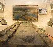 Ampliar información de Museo Ciencias Naturales de Arnedo