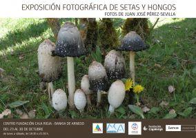 """Ampliar información de XXXI Semana de las Ciencias: Exposición fotográfica """"Setas y Hongos""""."""