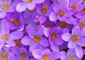 Ampliar información de La primavera la sangre altera