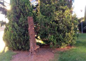 Ampliar información de ¿Por qué han cortado este árbol?